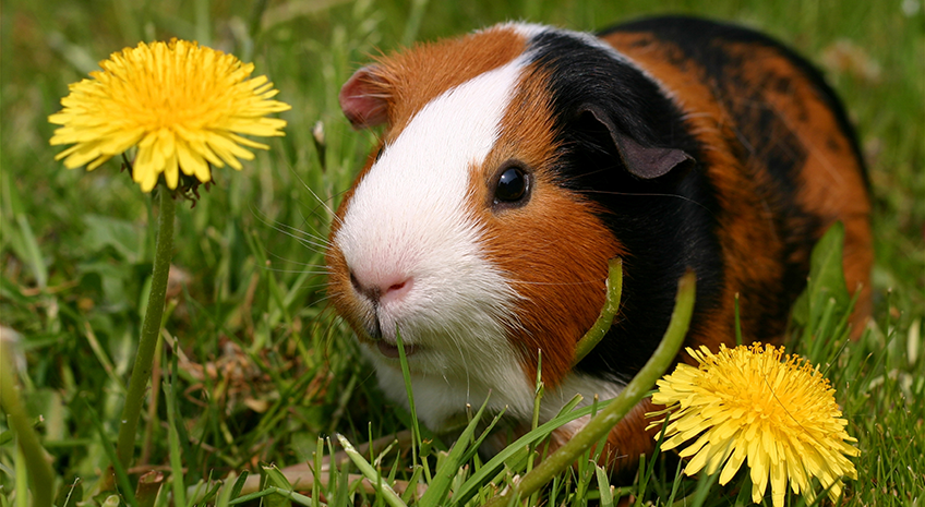 Holistic Pet Care Rodents: Are they the best pet?