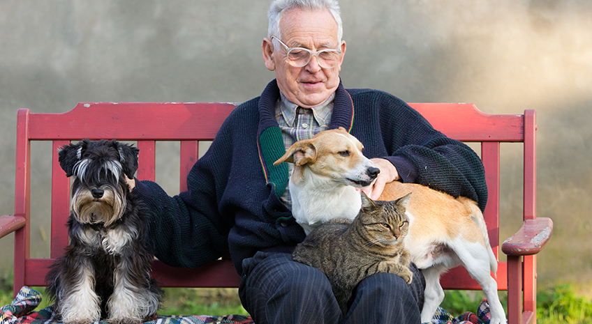 The Complete Holistic Pet Care Guide for Aging Pets