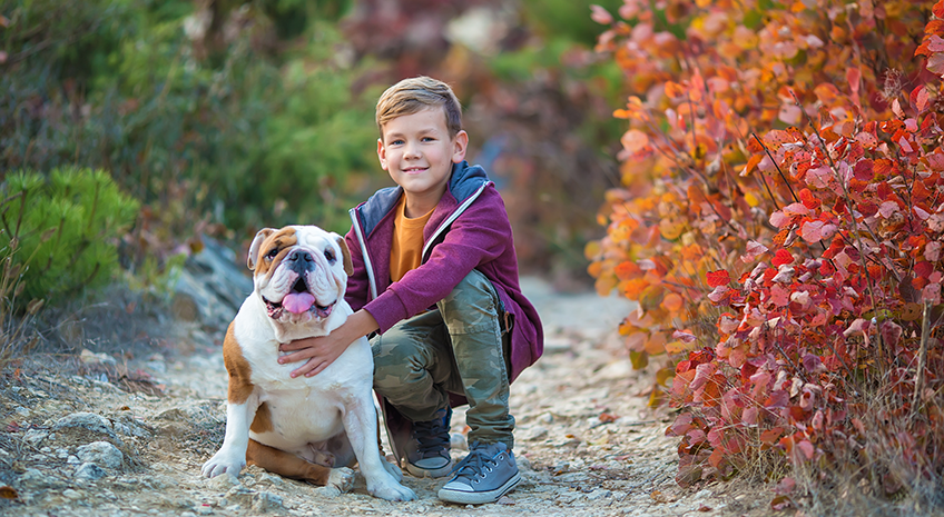 Noni for Pets: Top 4 Reasons why your Pet needs Noni