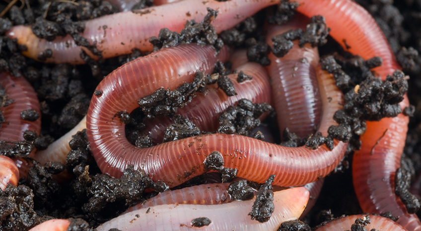 Earth Day Fun- Earthworms