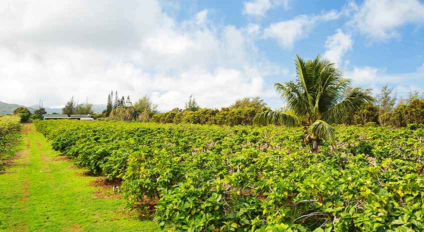 Top 10 Reasons to Visit Us on Kaakaaniu Plantation
