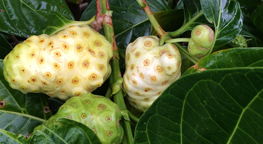 Don't Be Fooled by the Hype: Noni Juice Fact and Fiction